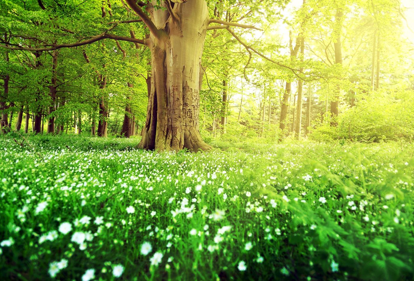 Friedwaldbestattung in Berlin: Mit der Natur verbunden