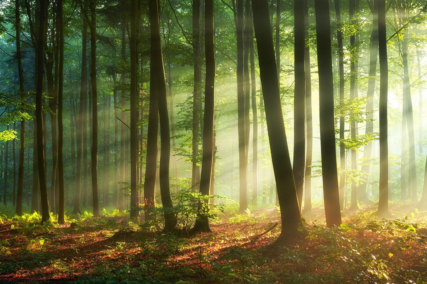 Frieden in der Natur finden